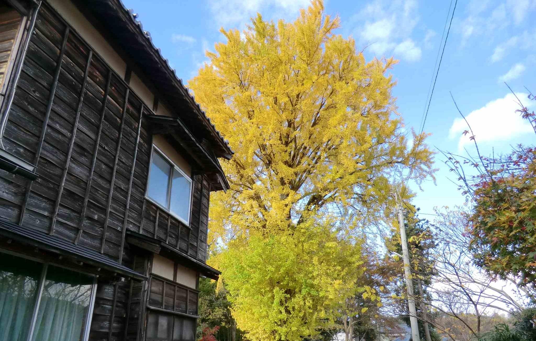 秋の寒い空