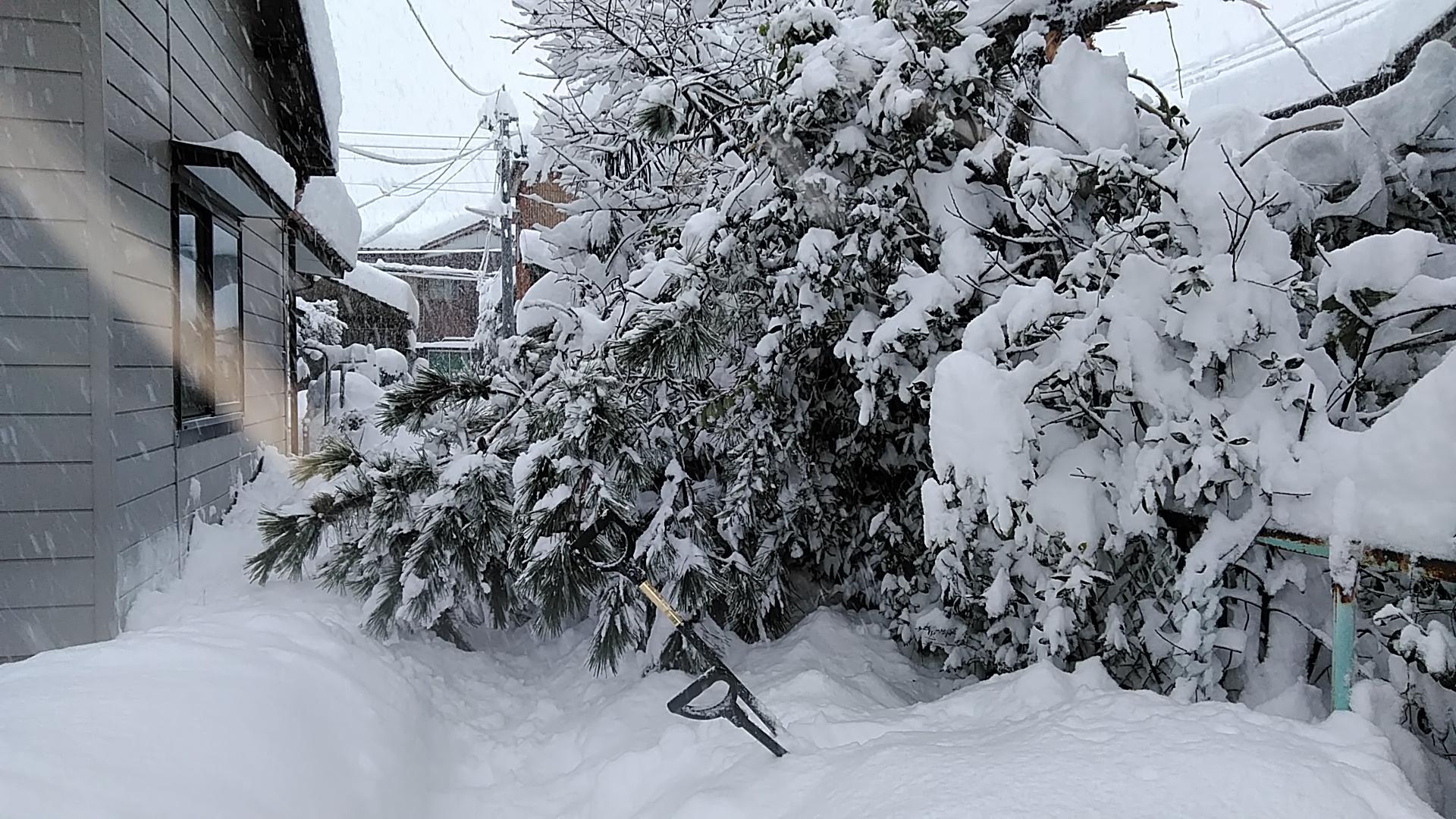 大雪 恐るべし(°0°)