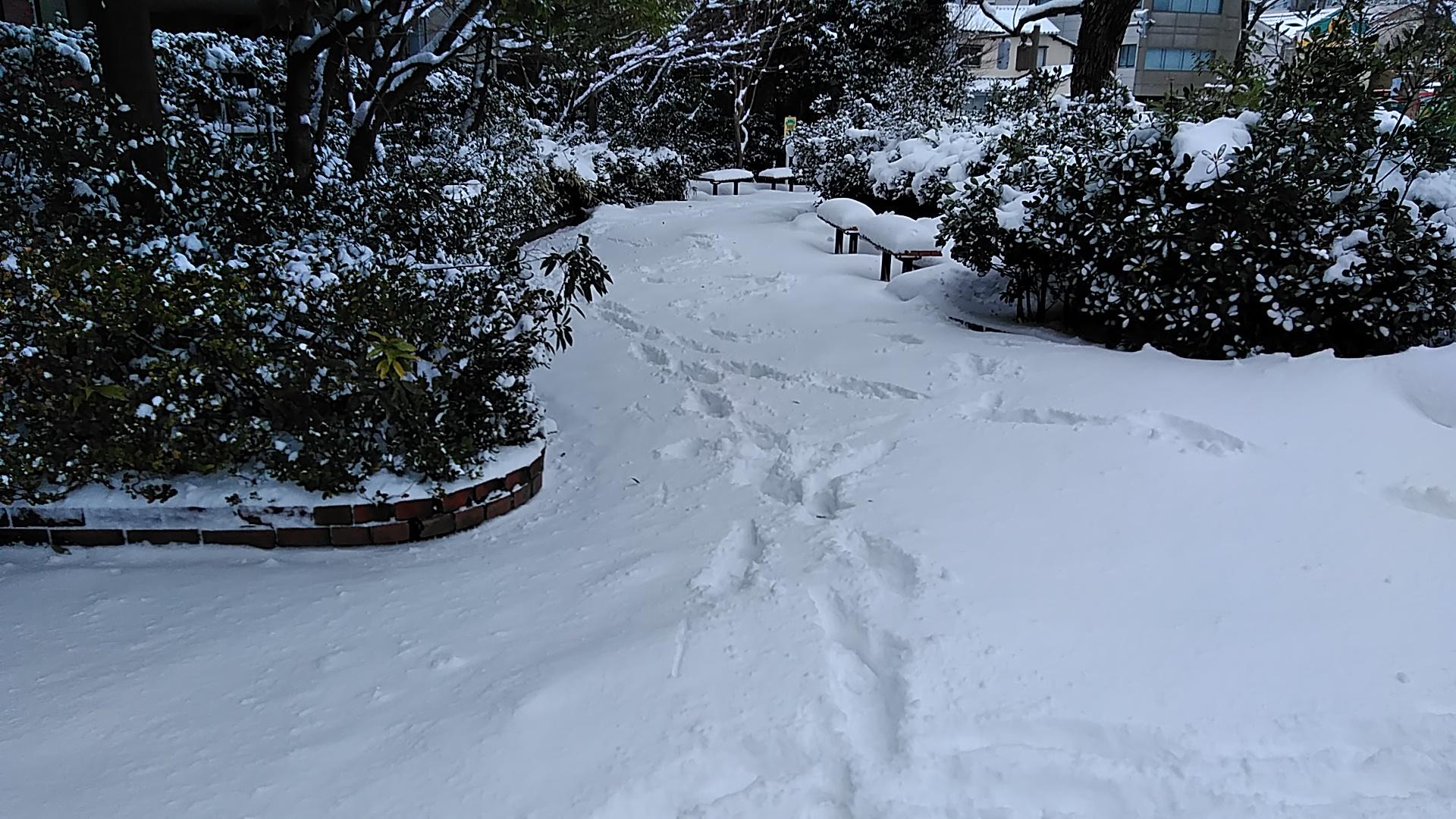 ポケットパーク除雪(^^;)