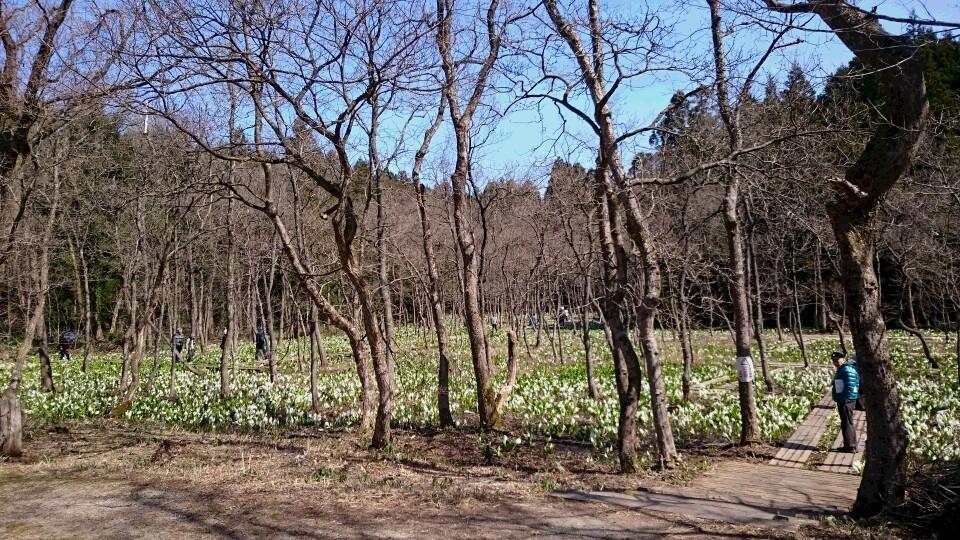 春の五泉~水芭蕉公園