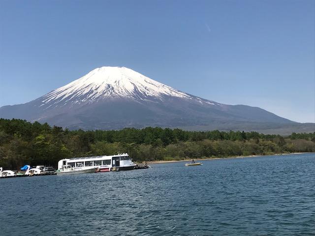 キレイな富士山と桜です。