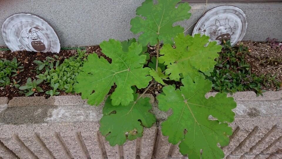 この植物の名前が知りたいのですが・・・
