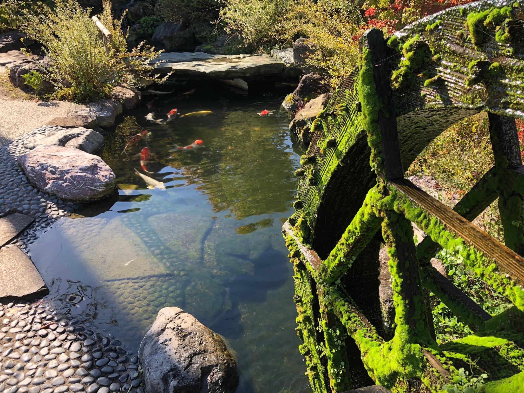 月岡温泉の池