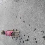 雪の日の朝に怪しげな足跡!