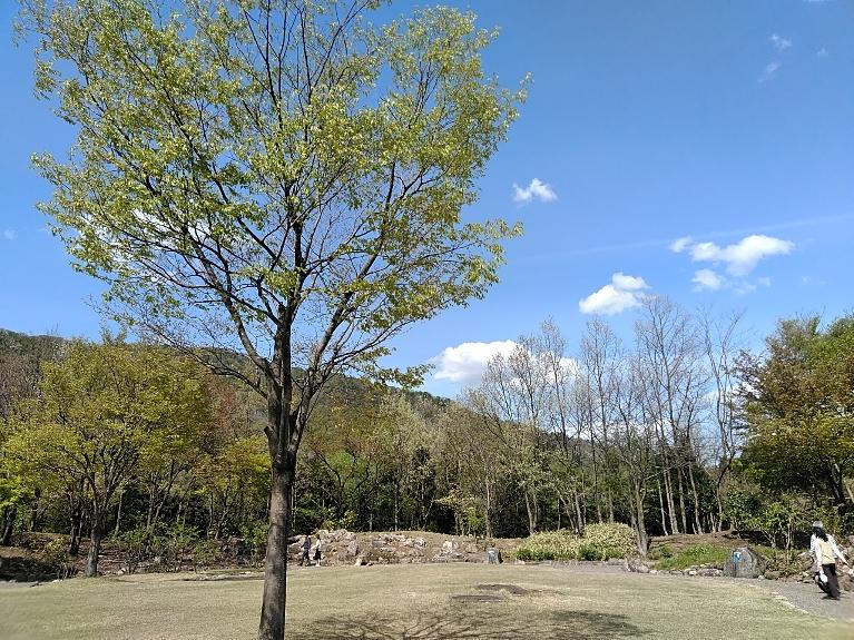 新緑の季節です。