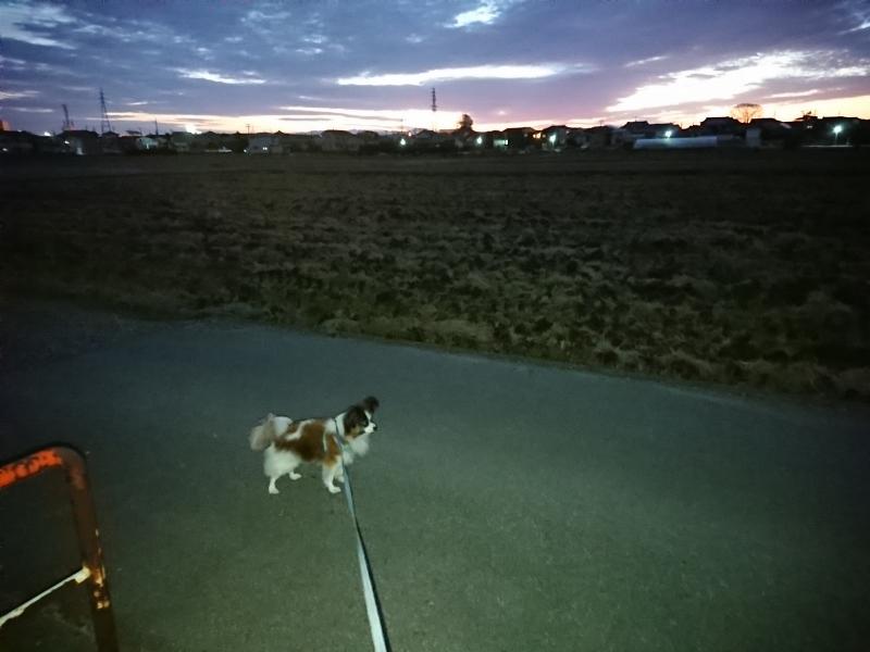 散歩 (800x600)