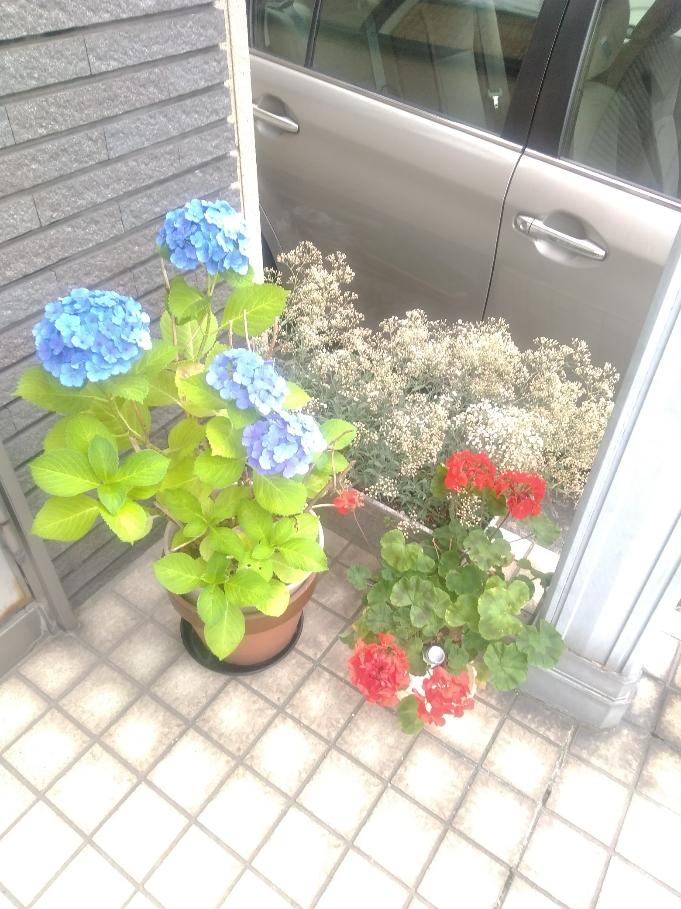 梅雨時にささやかに咲いていました・・・・・・