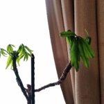 「観葉植物」